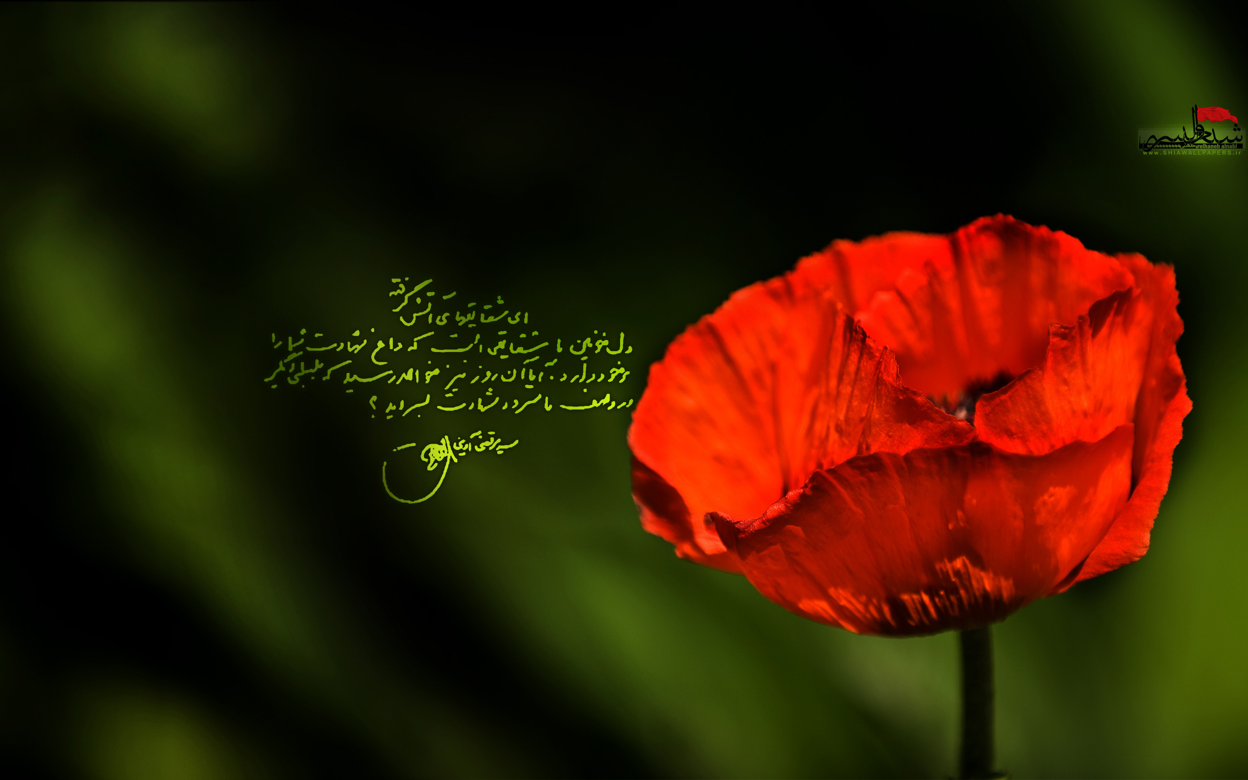 http://shiawallpapers.ir/wp-content/uploads/2010/11/shaghayegh-BY-shiawallpapers1.jpg